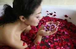 Termas da pétala de Rosa Imagens de Stock Royalty Free