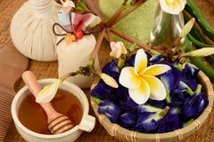 Termas do cabelo dos tratamentos com aloés vera, ervilha de borboleta, óleo de coco e mel Imagens de Stock