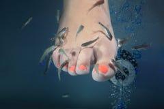 Termas dos peixes Fotos de Stock Royalty Free