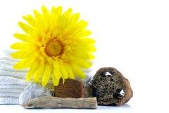 Termas e bem-estar que ajustam-se com toalha, gerbera, peças de madeira, natu Fotografia de Stock Royalty Free