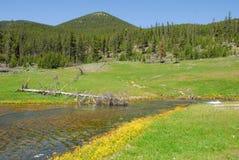 Termicznej wiosny rzeka Obrazy Stock