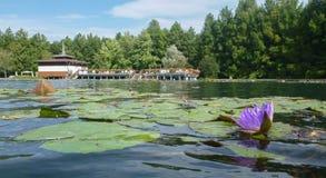Termiczny jezioro w Heviz w Hungar Zdjęcie Royalty Free