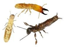 termiet stock afbeeldingen