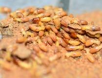 termieten Royalty-vrije Stock Foto's