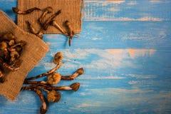 Termietpaddestoel op een houten lijst in blauw Royalty-vrije Stock Foto's