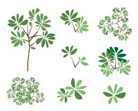 A Set of Isometric Green Trees and Plants Royalty Free Stock Photography