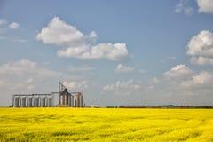 Terminale del grano Fotografia Stock Libera da Diritti
