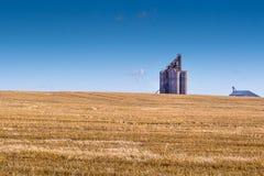 Terminale del grano sulle praterie Immagini Stock Libere da Diritti