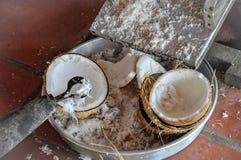 Terminu koks może odnosić sie całej kokosowej palmy ziarna lub owoc, Fotografia Stock