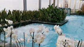 Termisk pöl som är inomhus med blommor på kanten arkivfilmer