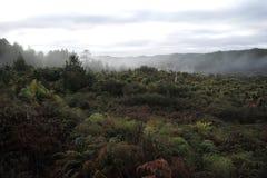 Termisk skog i Nya Zeeland arkivfoton