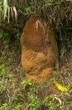 Termit kolonia Zdjęcie Stock