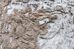 termit på trädskäll Royaltyfria Foton