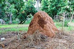 termita fotos de archivo