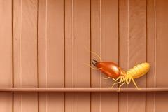 Termita, termitas en la pared de madera, termitas y decaimiento de madera, madera de la textura con la termita de la jerarqu?a u  stock de ilustración
