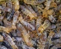 termitas fotografía de archivo