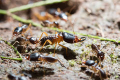 termitas Imagen de archivo
