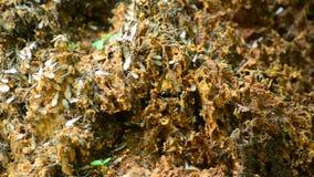 termitas almacen de video