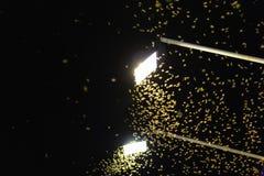 Termitdrottningflyg p? de ljusa ljusen royaltyfria bilder