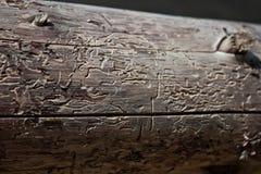 Termite Image stock