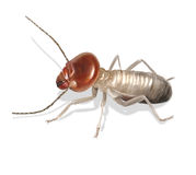 termite Lizenzfreies Stockbild