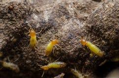 termite Royaltyfria Bilder