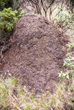 termite Royaltyfria Foton