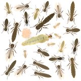 Termite animals - nest Stock Images