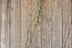 Termite Damage Stock Photos
