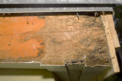 Termite Damage Stock Images