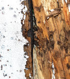 Termite Damage Stock Images