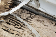 Termite damage rotten wood eat nest destroy concept Royalty Free Stock Photos