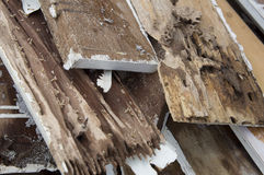 Termite damage rotten wood eat nest destroy concept Stock Image