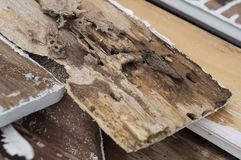 Termite damage rotten wood eat nest destroy concept Royalty Free Stock Images