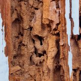 Termite damage Royalty Free Stock Photography
