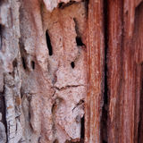 Termite damage Royalty Free Stock Images