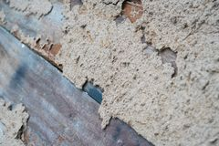Termite damaged timber on wooden wall.  royalty free stock photography