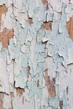 Termite damaged wood Royalty Free Stock Image