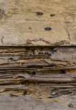 Termite damaging wooden wall Stock Photos