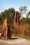 Termite-Damm Lizenzfreie Stockbilder