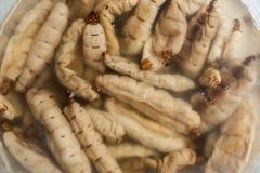 Termite de reine pour le vendre sous le nom de nourriture sur le marché libre rural Image stock