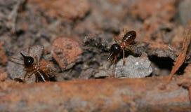 Termite on earth Stock Photos