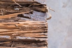Termite eat wood. To see the surface is lined striped stock photography