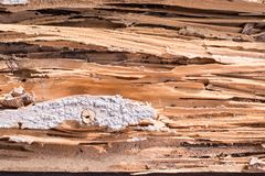 Termite eat wood. To see the surface is lined striped royalty free stock image