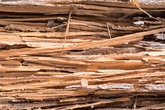 Termite eat wood. To see the surface is lined striped stock images