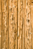 Termite eaten wood. Wood fence damaged by termites Stock Photos