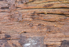 Termite eaten wood wall old until disintegrated. Soil from termite eaten wood wall old until disintegrated stock photo