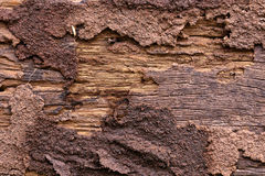 Termite eaten wood wall old until disintegrated. Soil from termite eaten wood wall old until disintegrated royalty free stock photo