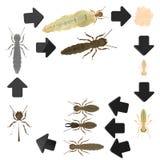 termite för cirkuleringslivstid royaltyfri illustrationer