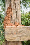 Termite on fence background. Orange Termite nest  on brown fence background Royalty Free Stock Image